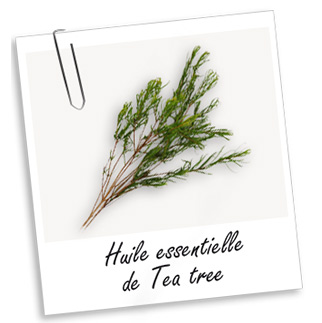 huile essentielle tea tree 10ml fabellashop dakar s n gal. Black Bedroom Furniture Sets. Home Design Ideas