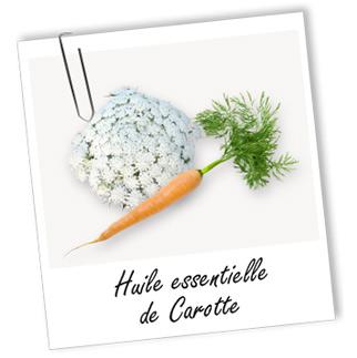 Huile essentielle de carotte