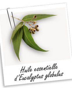 Huile-essentielle-eucalyptus-globulus