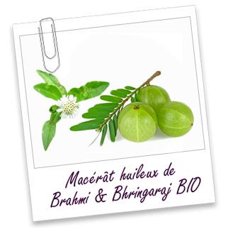 Macerat Huileux de brahmi et Bringaraj